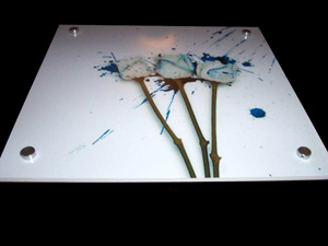 Лист оргстекла молочно белого глянцевого 300х300мм толщина 3 мм